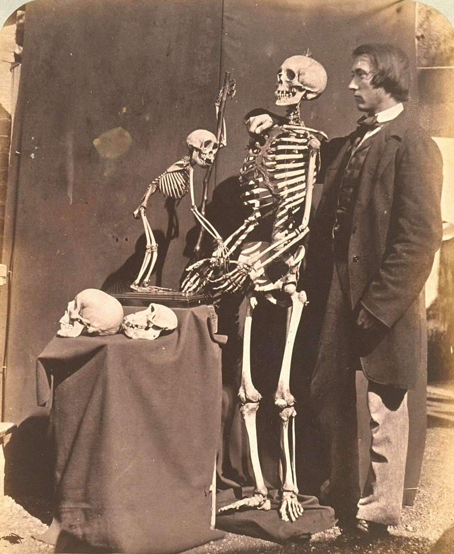 Reg在ald Southey 和 Skeletons, 1857, by 刘易斯·卡洛尔