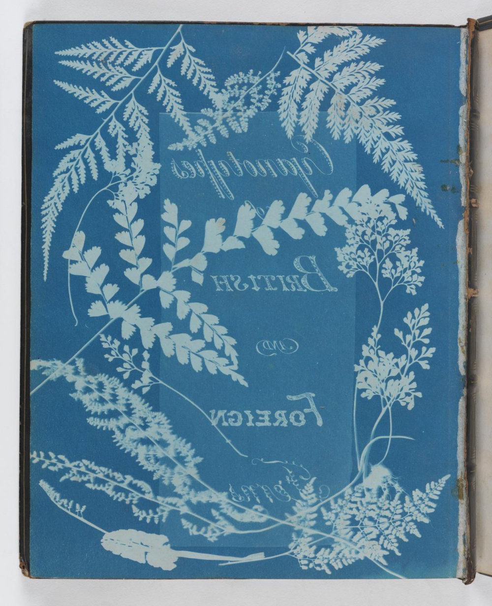 A photograph of a book with a light blue cover illustrated with white floral patterns